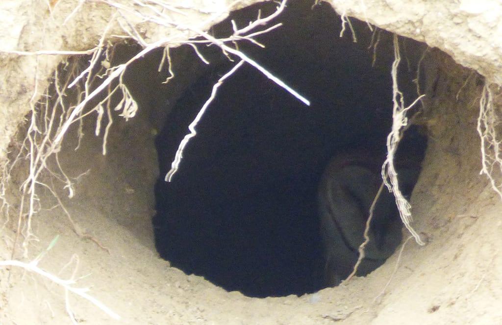 owl-St-Vrain-River Longmont Boulder