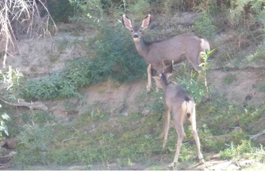 deer_Canoe-Green-River-Utah