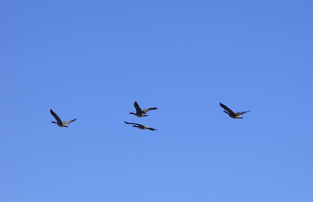 birds Canoeing-St Vrain-Longmont Boulder