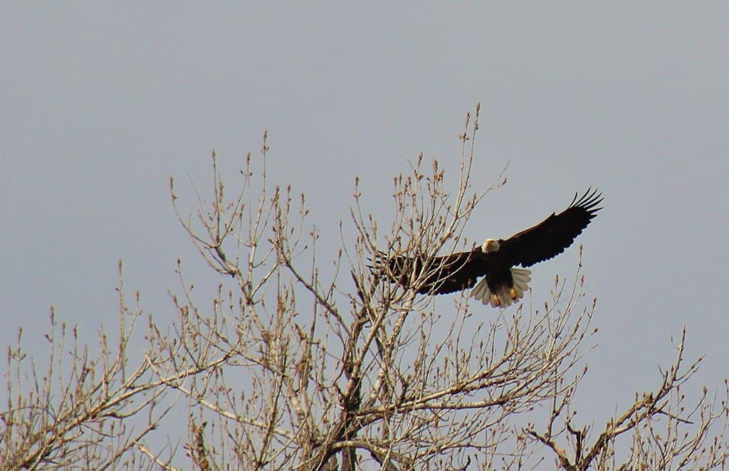 eagle-landing-st-vrain-canoeing