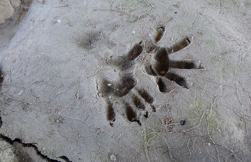 opossum_tracks Guided-Canoeing-Trips-Longmont