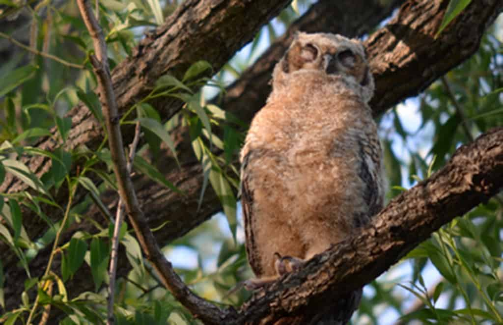owl-baby Guided-Canoeing-Trips-Longmont